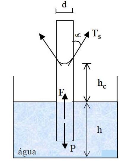 Equilíbrio do fluido no tubo capilar